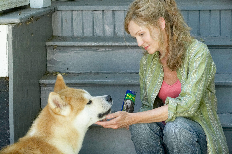 там самые верные собаки картинки все
