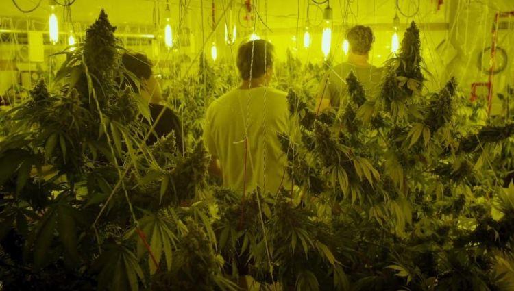 Фильмы подросток марихуана и сажать при какой марихуану температуре